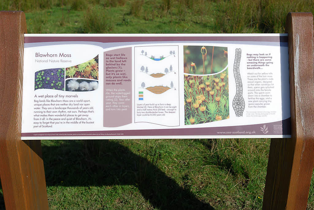 An interpretation panel that explains the formation of peat bog using brief text and lively illustrations.