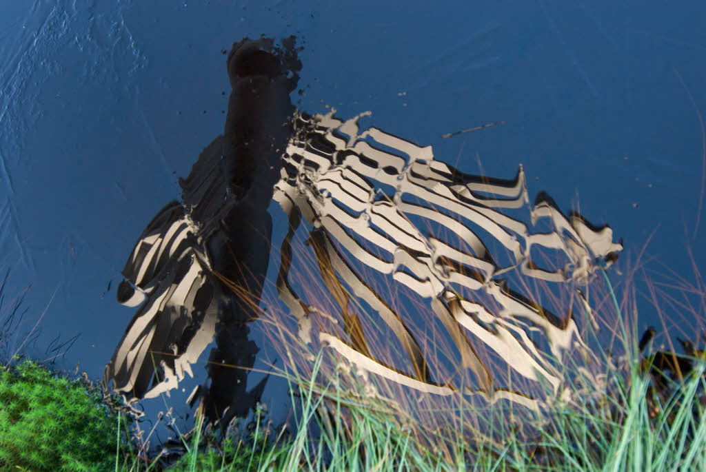 A sculpture of a dragonfly, reflected in the still water of a bog pool.